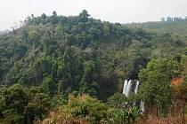 Džungle - ilustrační foto