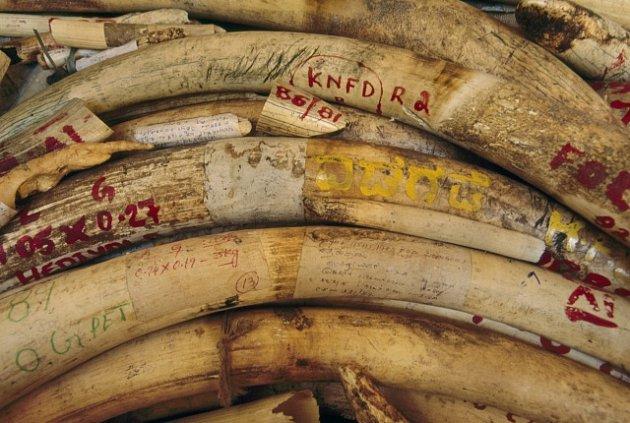 Obchod se sloními kly