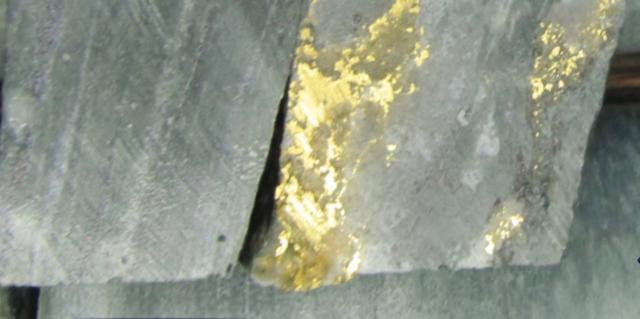 Zlatá žíla těžební společnosti NioGold