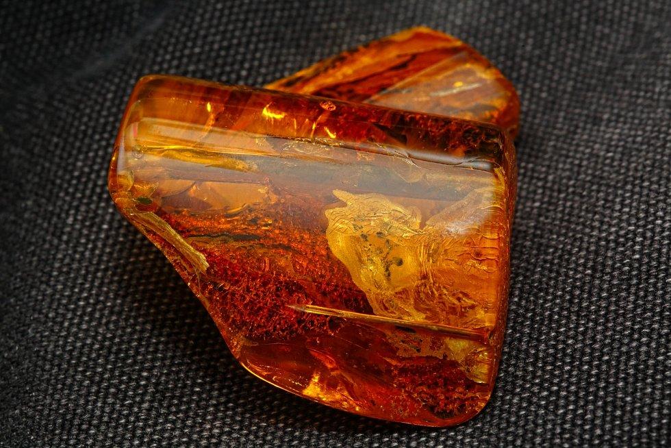 Zkamenělé exkrementy by mohly být alternativou k jinému materiálu známému zachovalými fosiliemi hmyzu: jantaru.