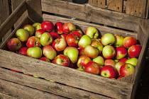 Skladování jablek