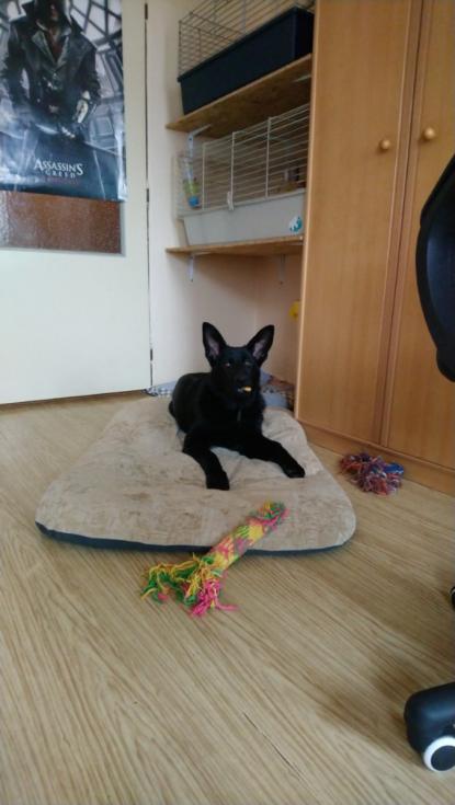 Bella dostala kostičku.