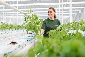 Společnost Farma Bezdínek začala pěstovat rajčata a okurky ve svých nových sklenících v Dolní Lutyni na Karvinsku. První vypěstované okurky se na pulty obchodů dostanou na přelomu roku.