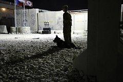 Voják se psem hlídkoval 5. srpna 2018 na základně Bagrám v Afghánistánu u pietního místa na počest tří českých vojáků, kteří tentýž den zemřeli při útoku sebevražedného atentátníka.