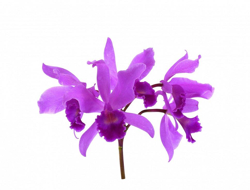 Orchideje nesnášejí tvrdou vodu, takže dešťovka je pro ně ideální. Pokud nemáte dešťovku, vodu jim převařte.