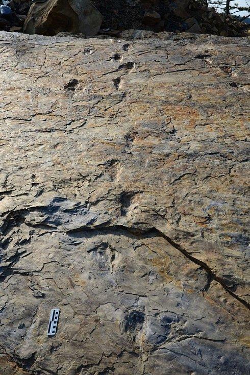 Zkamenělé otisky krokodýlích nohou, jež dovedly vědce k myšlence, že tito dravci chodili jen po zadních