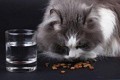 kočka, ilustrační foto