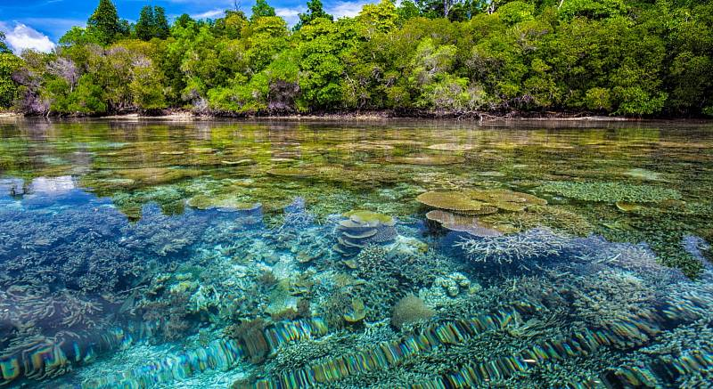 Přitom díky nim existuje více než 25 procent mořského života. Třeba nejrůznější bezobratlí živočichové.