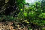 Vizualizace prehistorického deštného pralesa.