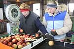 V Klapém u Lovosic třídí jablka, která poputují na vánoční trh po celé ČR prostřednictvím odbytových družstev, ale mohou si jablka zákazníci koupit přímo v prostorech centrálního skladu. Kvalita ovoce je i přes letošní nepřízeň počasí prý velmi slušná.