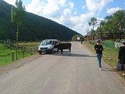 Koločava, krávy všude.
