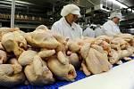 Drůbežárna, kuřata, výroba - ilustrační foto