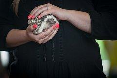 Sobotní 5. celostátní výstava exotických ježků v Pardubicích.
