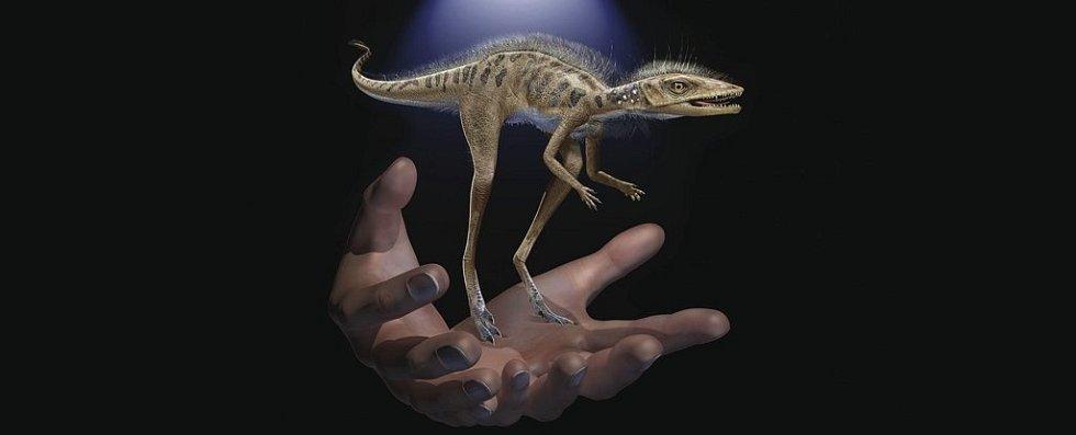 Takto mohl Kongonaphon kely vypadat ve srovnání s lidskou rukou