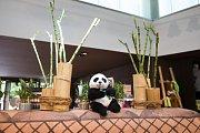 Berlínská zoo se připravuje na čínské pandy