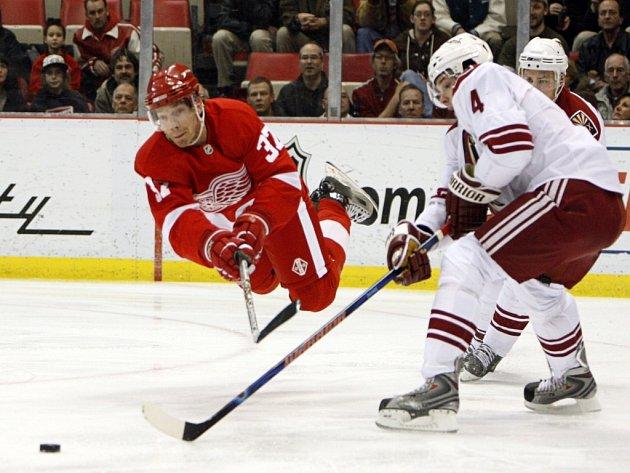 Mikael Samuelsson z Detroitu bojuje o puk s českým hokejistou ve službách Phoenixu Zbyňkem Michálkem. Domácí Detroit nakonec zvítězil nad Kojoty těsně 3:2.