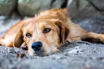 Opuštěný pes