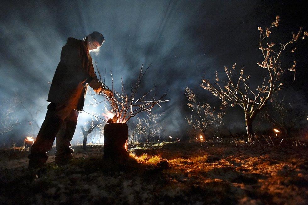 Sadař Jan Krejčiřík zahřívá první dubnovou noc za pomoci rozdělaných ohňů meruňkový sad ve Velkých Pavlovicích. Kvůli mrazům ohrožujícím úrodu.