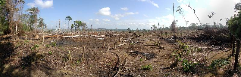 Odlesňování Amazonského deštného pralesa