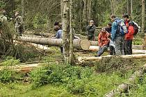 Aktivisté brání dřevorubcům v těžbě dřeva