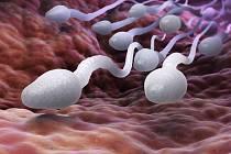 Spermie. Ilustrační snímek