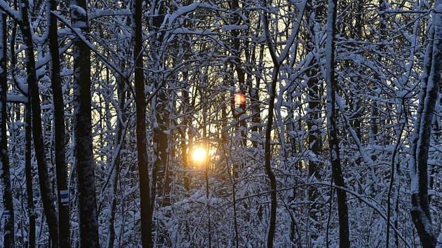 Slunce prosvítá skrz zasněžené stromy. Ilustrační foto