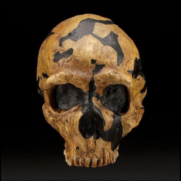 Lebka neandertálce nalezená v jeskyni Šánidar