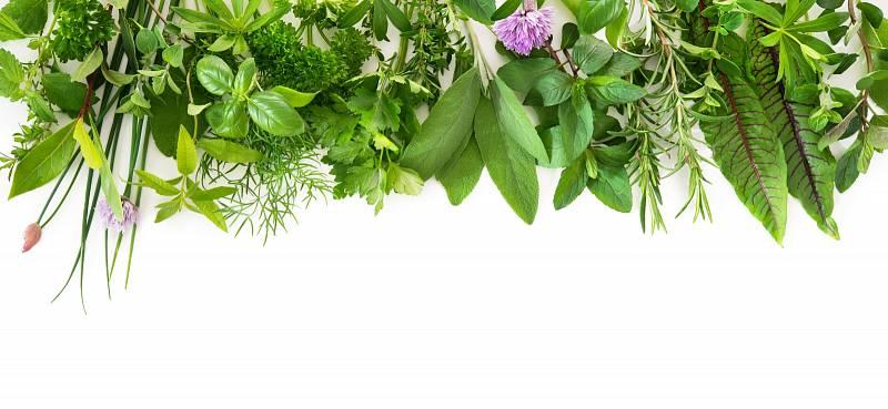 Léčivé rostliny jsou známy už od pradávna a i dnes se používají na celou řadu zdravotních neduhů.
