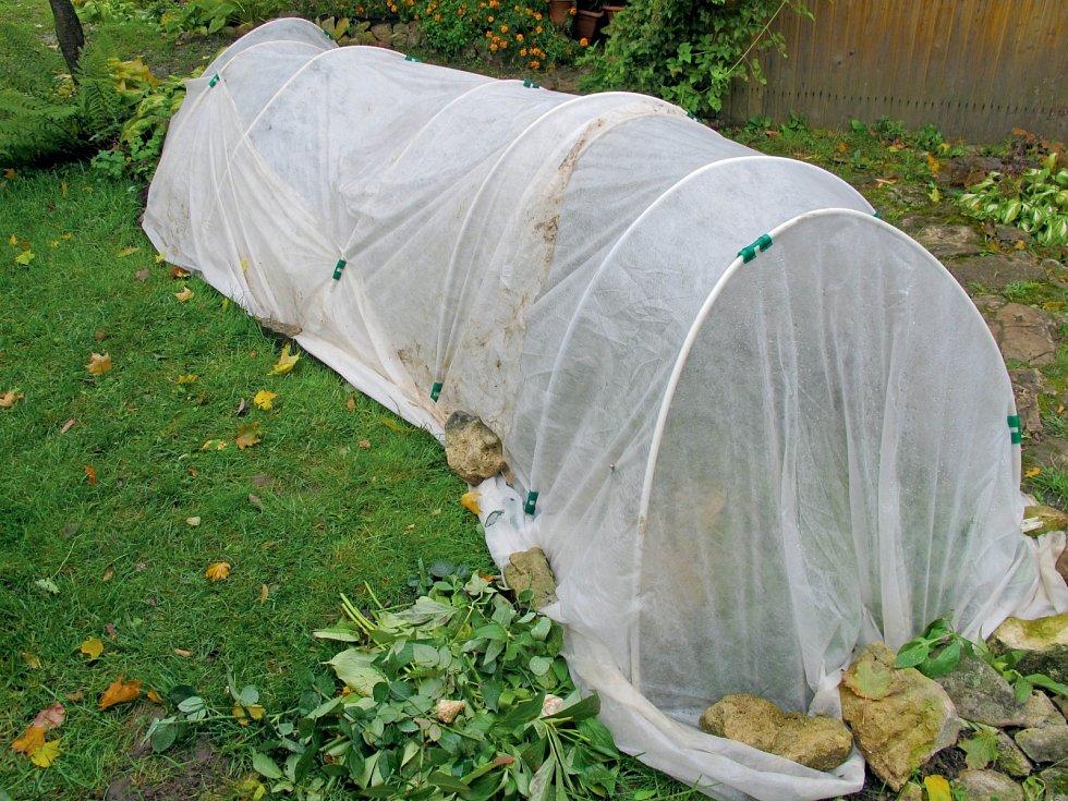 Během studené zimy izolujeme stěny zevnitř polystyrenem a na noc pařeniště zakrýváme pytli nebo bublinkovou fólií.