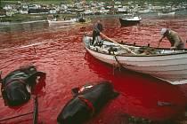 Bojovníci boje proti velrybám argumentují, že zabíjení inteligentních savců schopných altruismu je neetické. Ilustrační snímek porcování plejtváků malých byl pořízen vloni na dánském ostrově Farø.