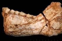 Vědci nalezli v Maroku pozůstatky člověka staré asi 300 tisíc let