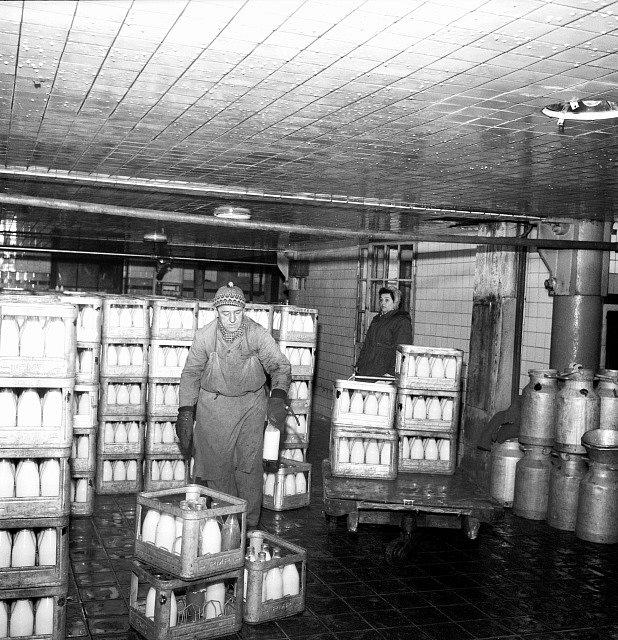 Pohled do expediční haly, kde osádky vozů přebírají mléko pro jednotlivé prodejny.