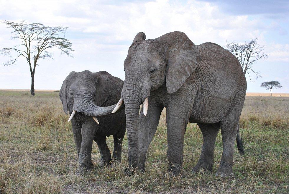 Oblast Serengeti v africké Tanzánii patří mezi nejzachovalejší ekosystémy na Zemi. Žije zde množství druhů zvířat i rostlin. Větší část území je národním parkem.