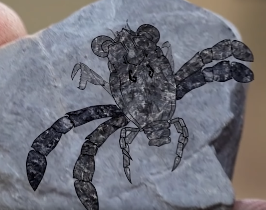 Objev kraba callichimaera perplexa