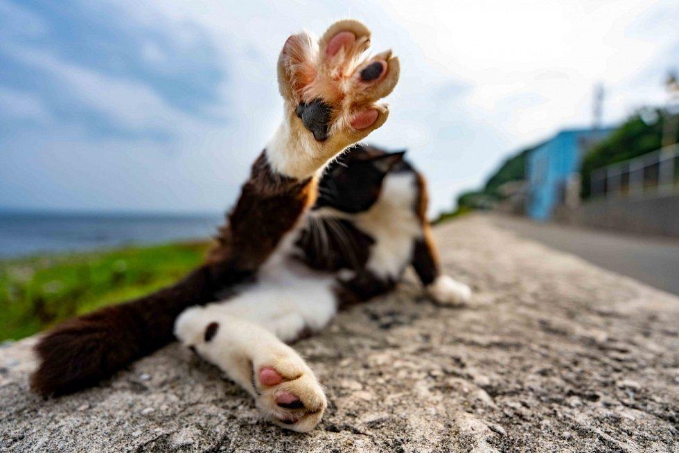Vítejte v kočičím ráji