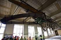Historickou budovu Národního muzea od letošního dubna rekonstruuje Sdružení M-P-I, jehož členy jsou Metrostav, Průmstav a IMOS Brno. Opravená budova by měla být veřejnosti k dispozici za tři roky.