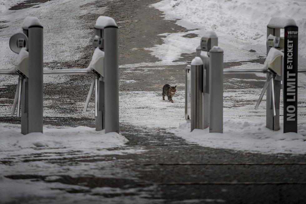 Brána pražské Zoo je uzavřená od 18. prosince 2020.