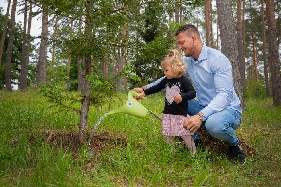 Lukáš Krpálek s dvouletou dcerou Marjánkou zasadil Lukáš Krpálek s dvouletou dcerou Marjánkou sází kryptomerii japonskou