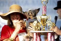 Vítěz soutěže o nejošklivějšího psa světa Toulavý Rošťák (Scamp the Tramp)