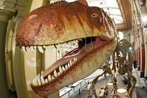 Dravý Allosaurus zpodobněný v berlínském muzeu přírody.