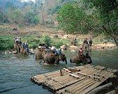 Jízda na slonech je oblíbenou atrakcí. Skrývá se za ní však utrpení.