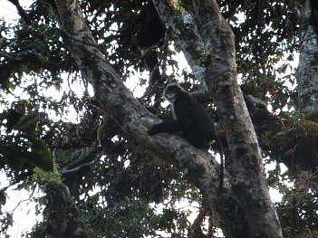 Čínští vědci oznámili, že se jim podařilo získat fotografie dokazující, že i v Číně žije skupinka vzácných tuponosých opic.