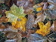 Námraza - listí - barvy - podzim