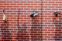 Symbolickým protržením papírové zdi, která výzývá k odstranění bariér pro podnikatele, byl 22. května na pražském Václavském náměstí vyhlášen druhý ročník soutěží PX Firma roku 2007 a Makro Živnostník roku 2007.