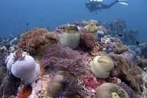 Světový fond na ochranu přírody bije na poplach – korálové útesy v jihovýchodní Asii do konce století zaniknou, pokud státy nepodniknou ráznékroky k jejich ochraně.Již dnes je podle zprávy organizace nenávratně ztraceno 40 procent útesů.