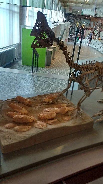 Oviraptor s vejci v Královském belgickém ústavu přírodních věd v Bruselu