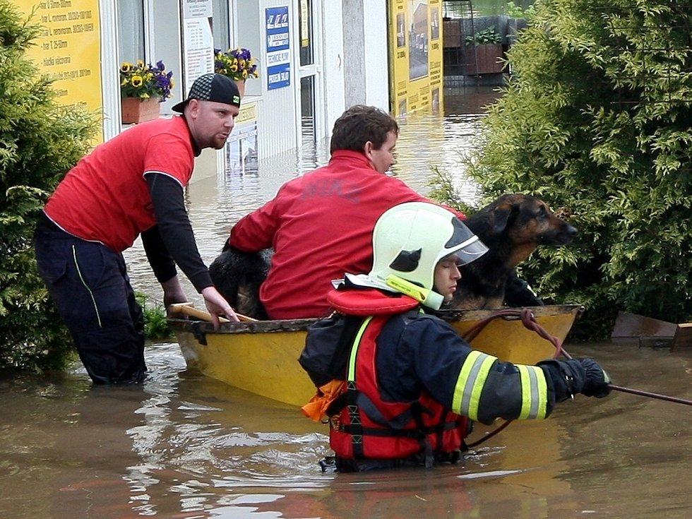 Hasiči a dobrovolníci pomáhali v Litoměřicích zachraňovat psy.
