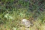 Alanya: v přírodě potkáte želvu