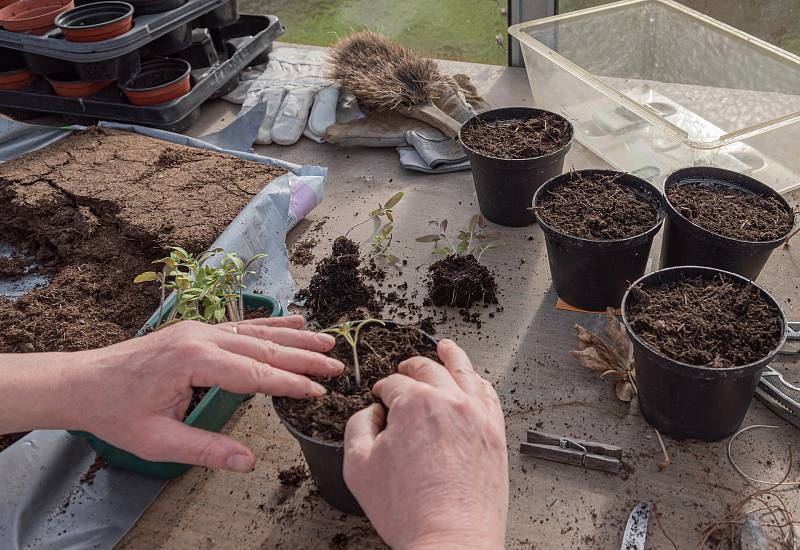 Substráty rozhodují o tom, jak dobře se rostliny ujmou a zakoření, hnojení pak o bohatosti úrody nebo květů.