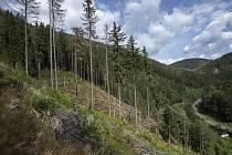 Svahy Špičáku nad Temným Dolem na Trutnovsku patří k oblastem východních Krkonoš, které nejvíce zasáhl přemnožený kůrovec.